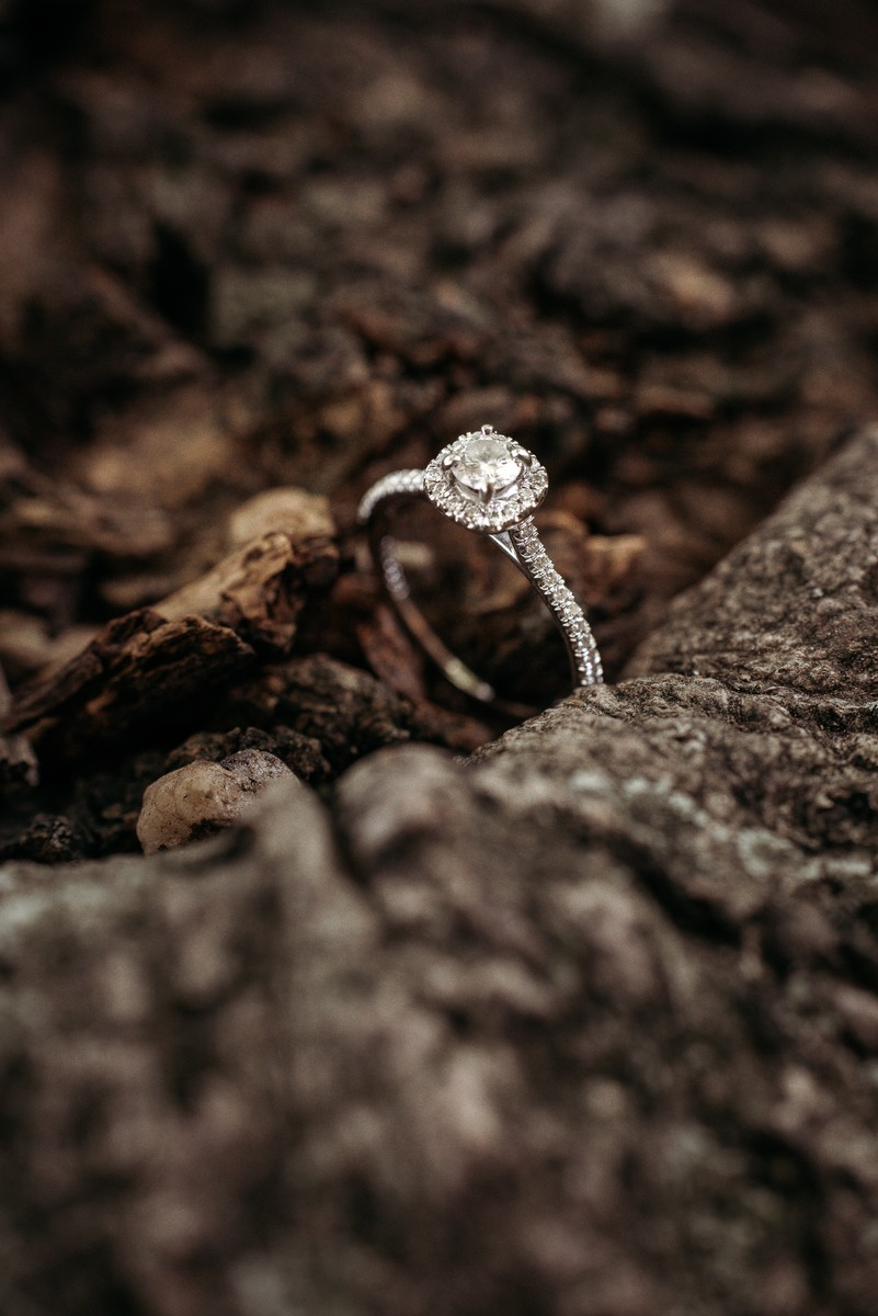 Engagement ring in tree roots
